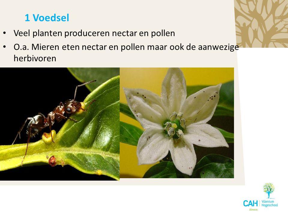 Veel planten produceren nectar en pollen O.a. Mieren eten nectar en pollen maar ook de aanwezige herbivoren 1 Voedsel