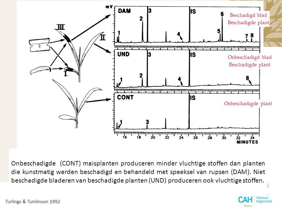 Onbeschadigde plant Beschadigd blad Beschadigde plant Onbeschadigde (CONT) maisplanten produceren minder vluchtige stoffen dan planten die kunstmatig