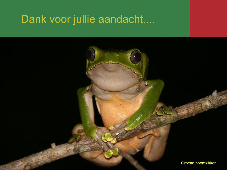 Groene boomkikker Dank voor jullie aandacht....