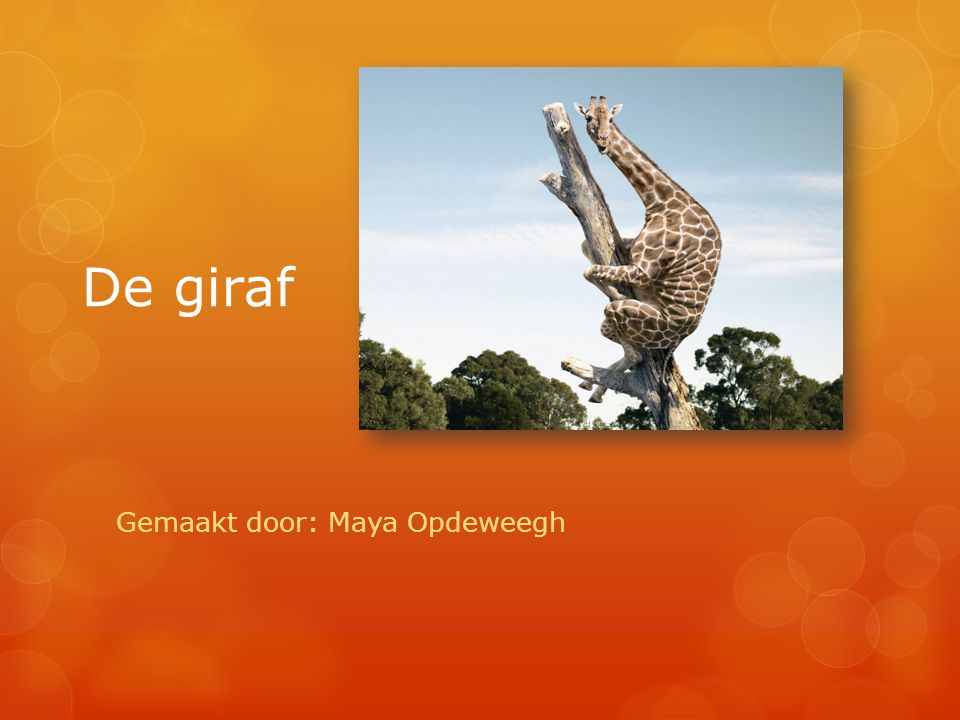 De giraf Gemaakt door: Maya Opdeweegh