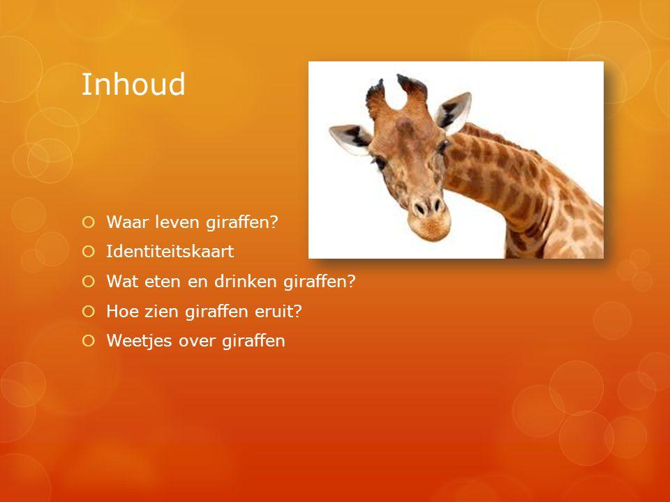 Inhoud  Waar leven giraffen?  Identiteitskaart  Wat eten en drinken giraffen?  Hoe zien giraffen eruit?  Weetjes over giraffen