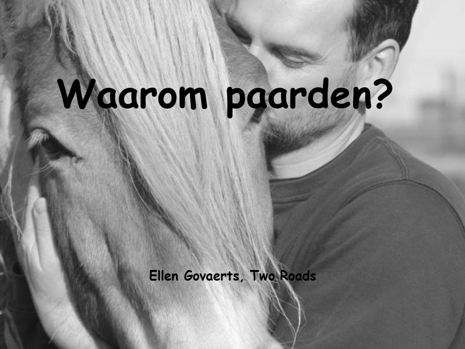 Ellen Govaerts, Two Roads Waarom paarden?