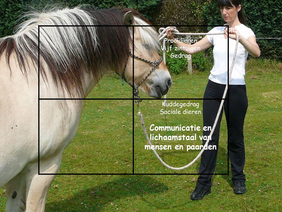 Prooidieren Vijf zintuigen Gedrag Kuddegedrag Sociale dieren Communicatie en lichaamstaal van mensen en paarden