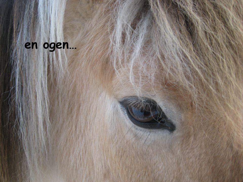 Het verhaal van de cliënt… Het verhaal van de therapeut… De beleving van het paard… Ik Wij SubjectiefObjectief