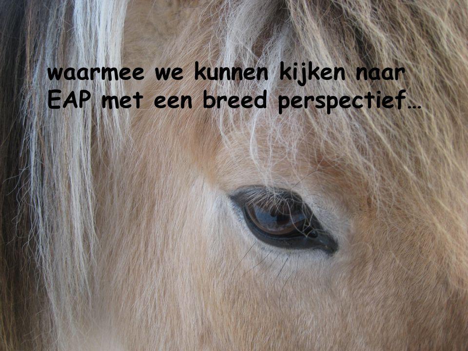 Wat gebeurt er nu eigenlijk tussen mensen en paarden…?