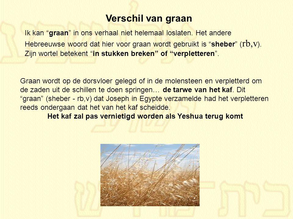 """Ik kan """"graan"""" in ons verhaal niet helemaal loslaten. Het andere Hebreeuwse woord dat hier voor graan wordt gebruikt is """"sheber"""" ( rb,v ). Zijn wortel"""