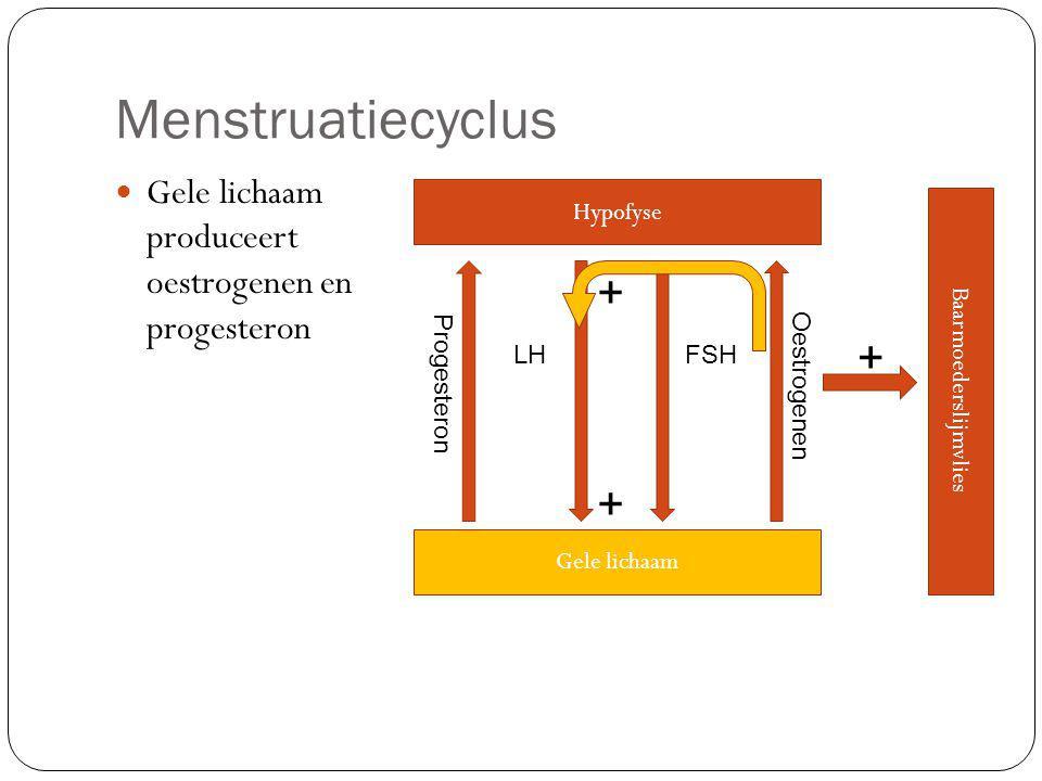 Menstruatiecyclus Gele lichaam produceert oestrogenen en progesteron Hypofyse LHFSH Gele lichaam Oestrogenen Baarmoederslijmvlies + + + Progesteron