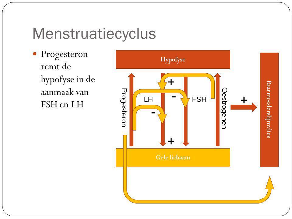 Menstruatiecyclus Progesteron remt de hypofyse in de aanmaak van FSH en LH Hypofyse LHFSH Gele lichaam Oestrogenen Baarmoederslijmvlies + + + Progesteron - -