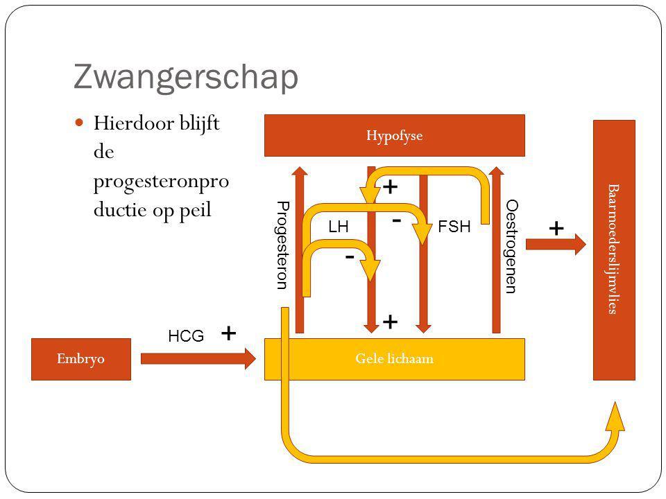 Zwangerschap Hierdoor blijft de progesteronpro ductie op peil Hypofyse LHFSH Gele lichaam Oestrogenen Baarmoederslijmvlies + + + Progesteron - - Embryo + HCG
