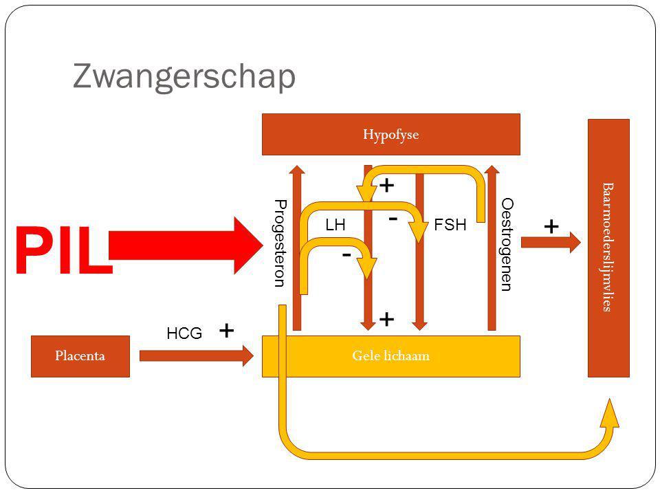 Zwangerschap Hypofyse LHFSH Gele lichaam Oestrogenen Baarmoederslijmvlies + + + Progesteron - - Placenta + HCG PIL