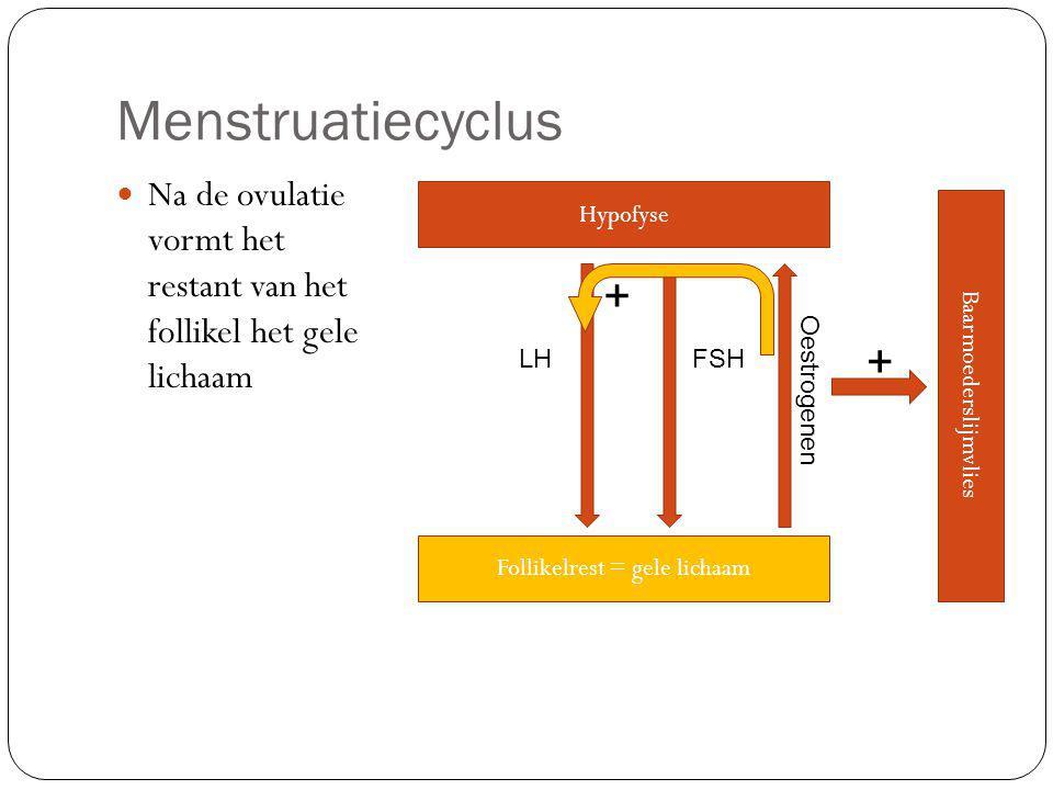 Menstruatiecyclus Na de ovulatie vormt het restant van het follikel het gele lichaam Hypofyse LHFSH Follikelrest = gele lichaam Oestrogenen Baarmoederslijmvlies + +