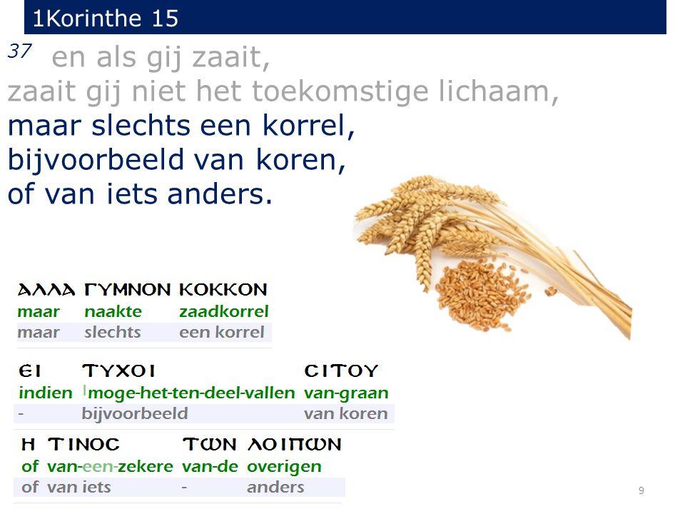 9 37 en als gij zaait, zaait gij niet het toekomstige lichaam, maar slechts een korrel, bijvoorbeeld van koren, of van iets anders. 1Korinthe 15