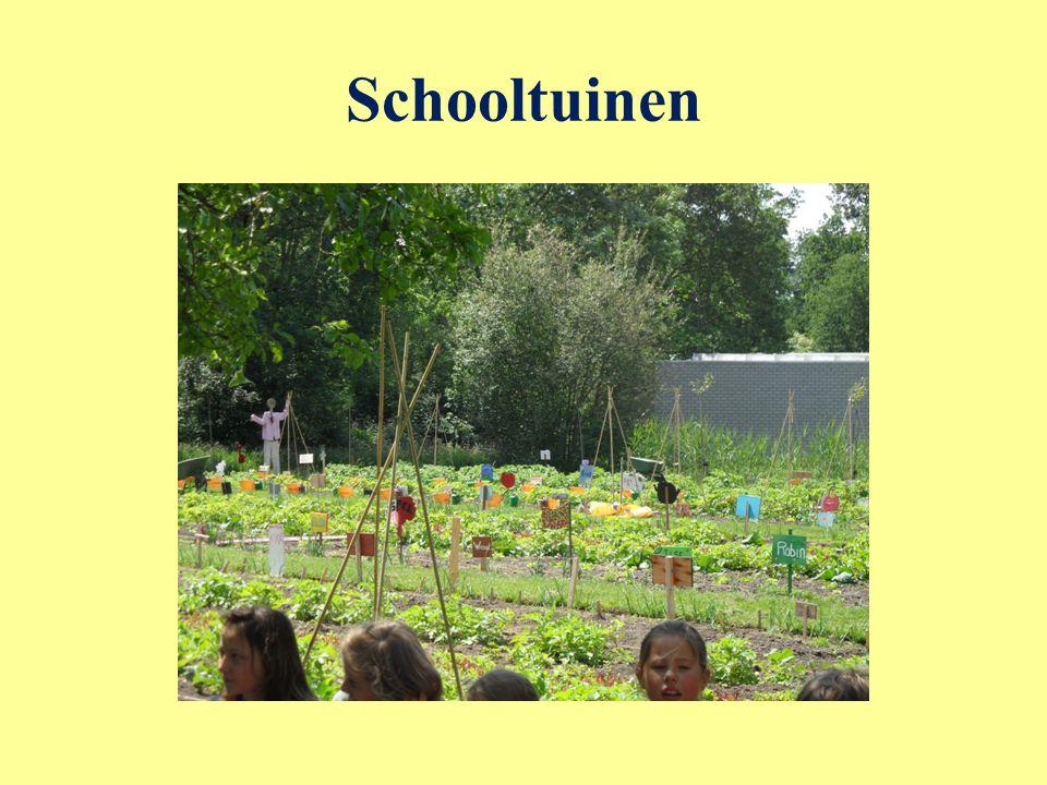 Schooltuinen