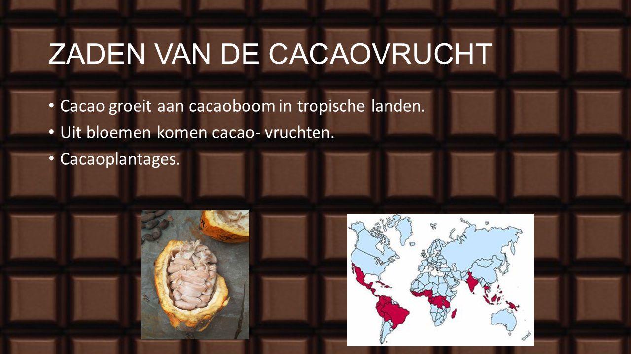 RECEPT UIT SPANJE 1600-1700 chocoladehuizen. Alleen voor rijke mensen, want cacao was duur. De Azteken leerden de Spanjaarden de voorloper van onze ch