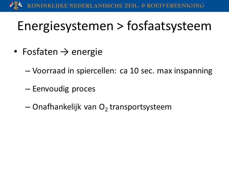 Energiesystemen > fosfaatsysteem Fosfaten → energie – Voorraad in spiercellen: ca 10 sec. max inspanning – Eenvoudig proces – Onafhankelijk van O 2 tr