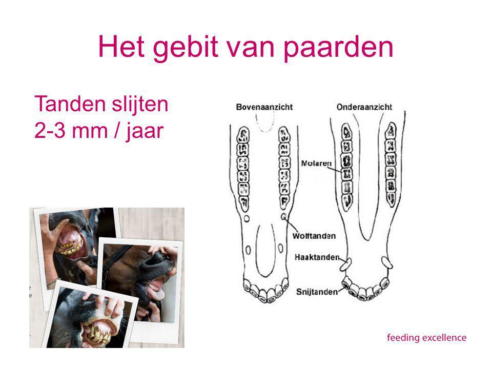 Het gebit van paarden Tanden slijten 2-3 mm / jaar
