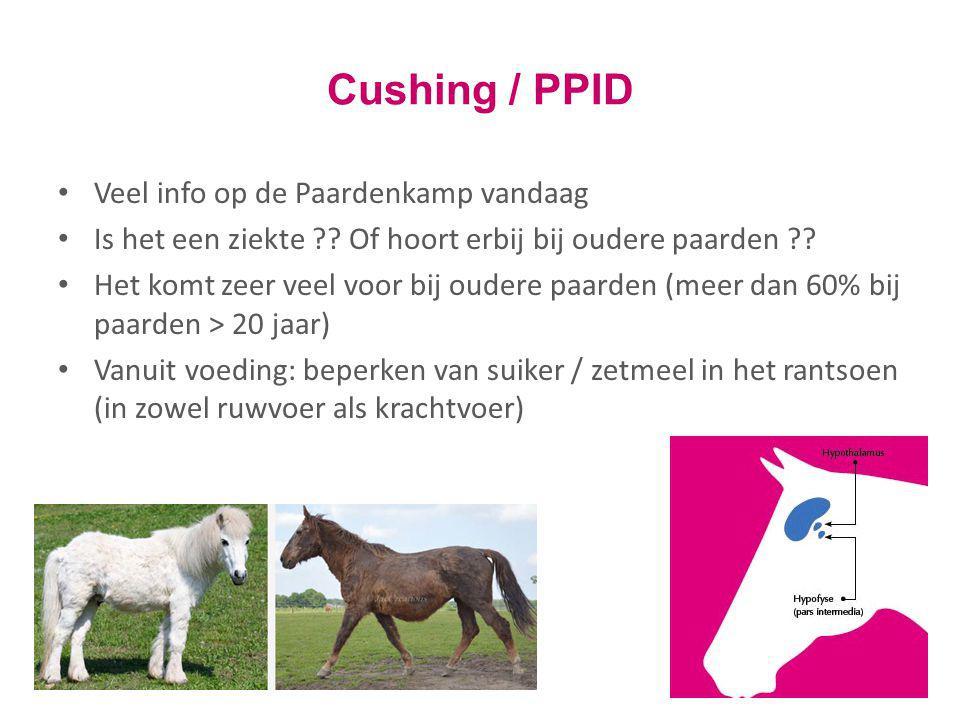 Cushing / PPID Veel info op de Paardenkamp vandaag Is het een ziekte ?? Of hoort erbij bij oudere paarden ?? Het komt zeer veel voor bij oudere paarde