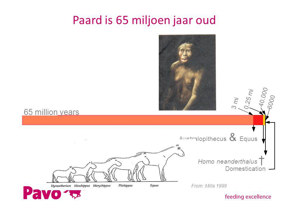 Paard is 65 miljoen jaar oud Domestication 65 million years 3 mi 0.25 mi 6000 Australopithecus & Equus Homo neanderthalus † 40.000 From: Mills 1999