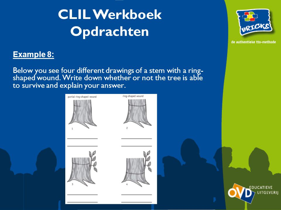 CLIL Werkboek Opdrachten Example 8: Below you see four different drawings of a stem with a ring- shaped wound.