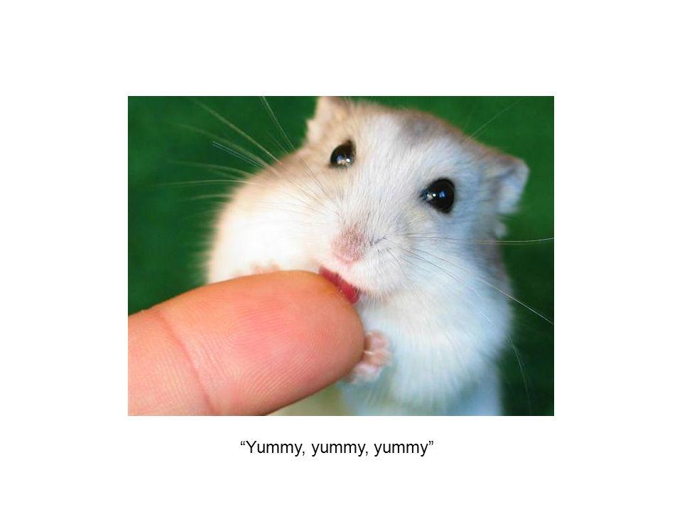 """""""Yummy, yummy, yummy"""""""