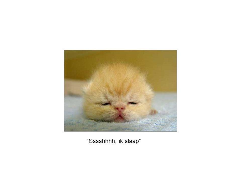 """Sssshhhh, ik slaap"""