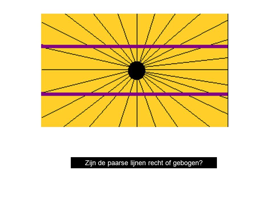 Are the purple lines straight or bent? Zijn de paarse lijnen recht of gebogen?
