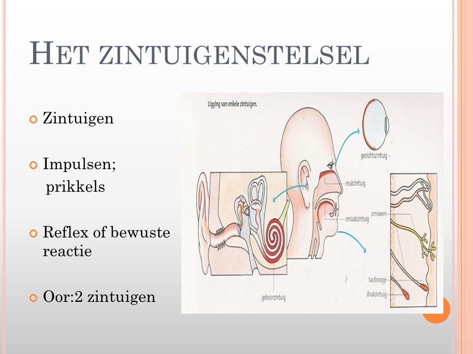 H ET ZINTUIGENSTELSEL Zintuigen Impulsen; prikkels Reflex of bewuste reactie Oor:2 zintuigen