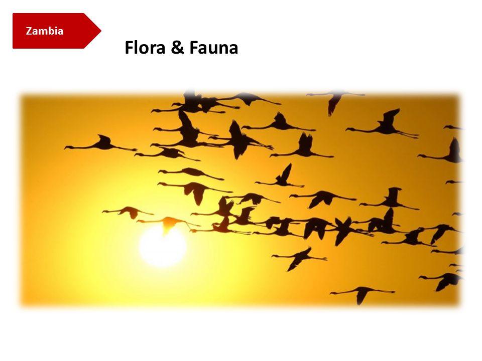 Zambia Flora & Fauna
