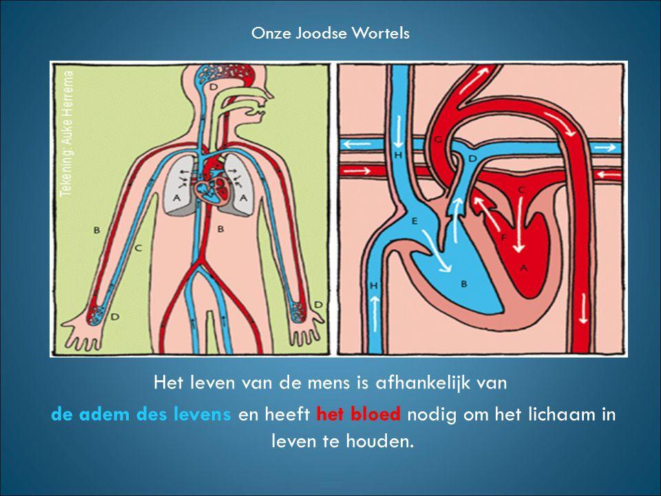 Het leven van de mens is afhankelijk van de adem des levens en heeft het bloed nodig om het lichaam in leven te houden.