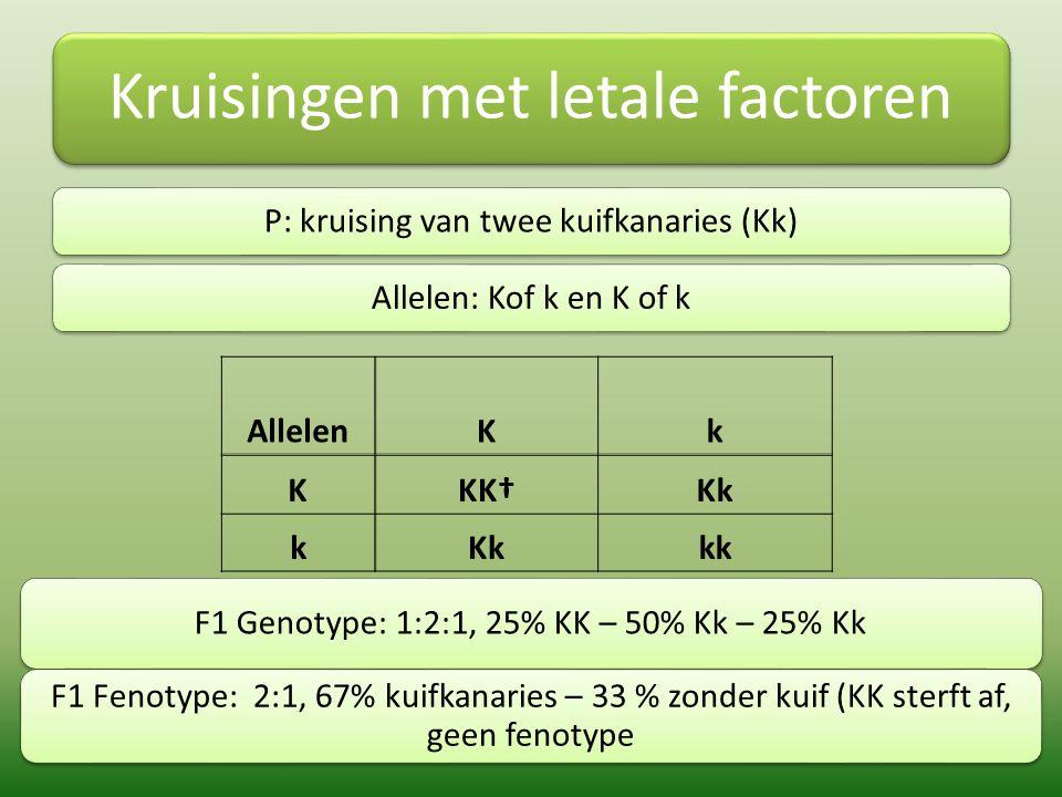 Kruisingen met letale factoren P: kruising van twee kuifkanaries (Kk)Allelen: Kof k en K of k AllelenKk KKK†Kk k kk F1 Genotype: 1:2:1, 25% KK – 50% K