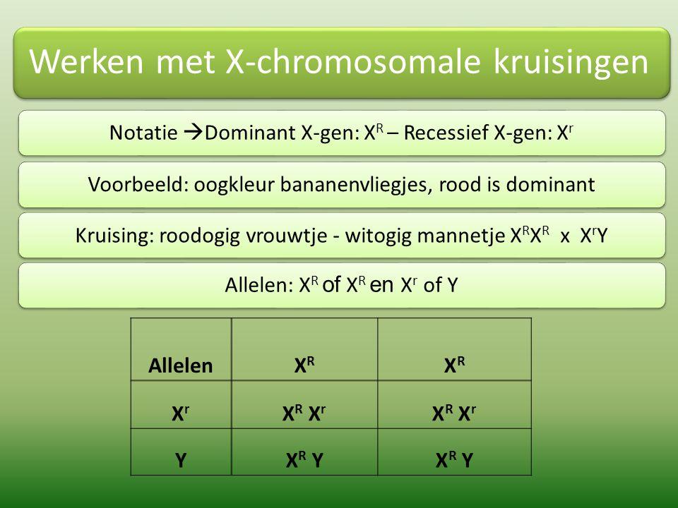 Werken met X-chromosomale kruisingen F1: Heterozygoot roodogig vrouwtje x roodogig mannetje  Allelen : X R of X r en X R of Y Allelen XR XR XrXr XRXR X R X R X r YX R YX r Y Genotype F2: vier verschillende typen in verhouding 1:1:1:1 Fenotype F2: drie verschillende typen in verhouding 2:1:1, namelijk 50% roodogige vrouwtjes, 25% roodogige mannetjes en 25% witogige mannetjes