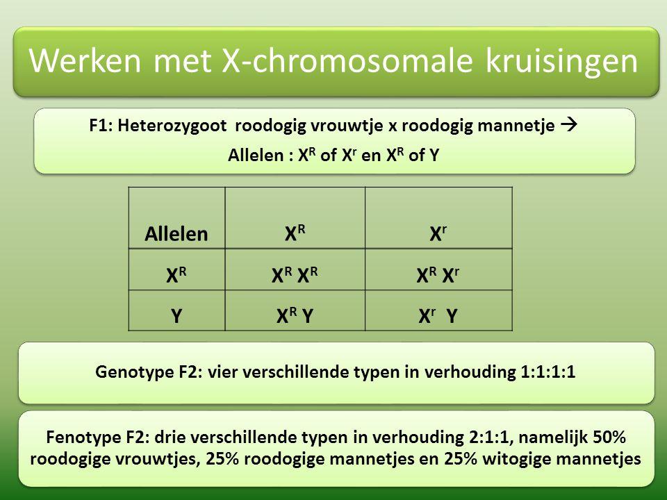 Werken met X-chromosomale kruisingen F1: Heterozygoot roodogig vrouwtje x roodogig mannetje  Allelen : X R of X r en X R of Y Allelen XR XR XrXr XRXR