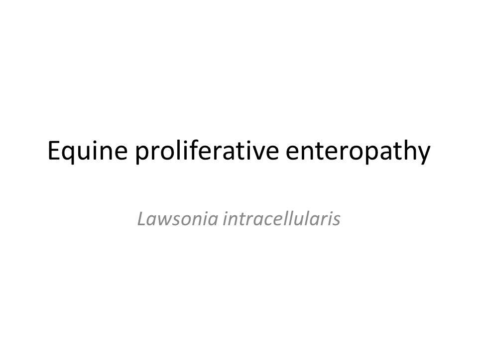 Equine proliferative enteropathy Lawsonia intracellularis