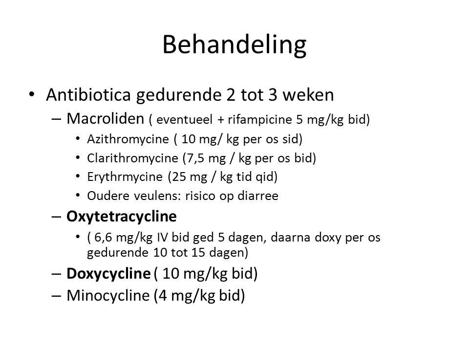 Behandeling Antibiotica gedurende 2 tot 3 weken – Macroliden ( eventueel + rifampicine 5 mg/kg bid) Azithromycine ( 10 mg/ kg per os sid) Clarithromycine (7,5 mg / kg per os bid) Erythrmycine (25 mg / kg tid qid) Oudere veulens: risico op diarree – Oxytetracycline ( 6,6 mg/kg IV bid ged 5 dagen, daarna doxy per os gedurende 10 tot 15 dagen) – Doxycycline ( 10 mg/kg bid) – Minocycline (4 mg/kg bid)