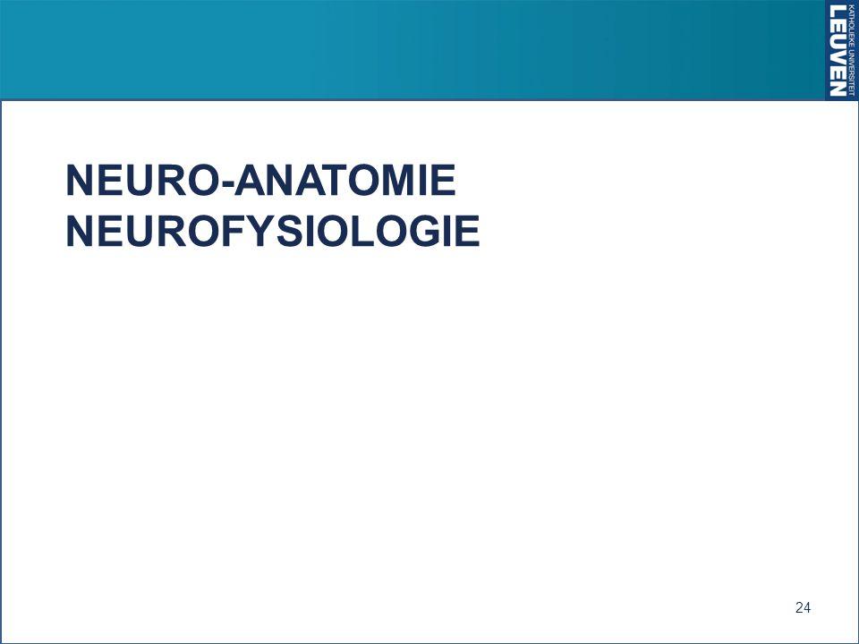 NEURO-ANATOMIE NEUROFYSIOLOGIE 24