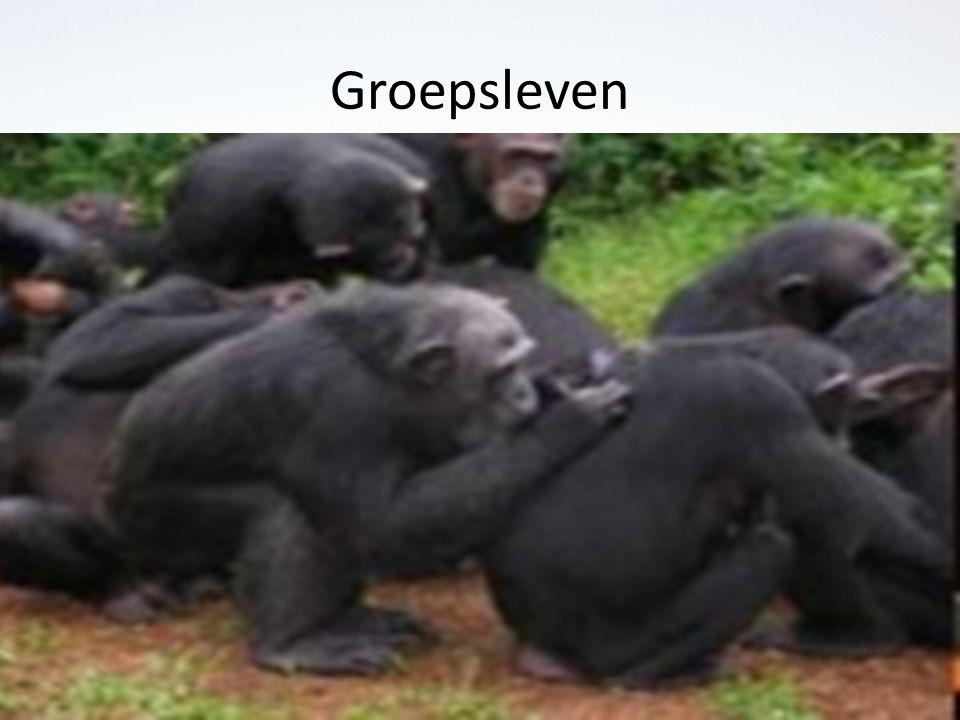 Groepsleven