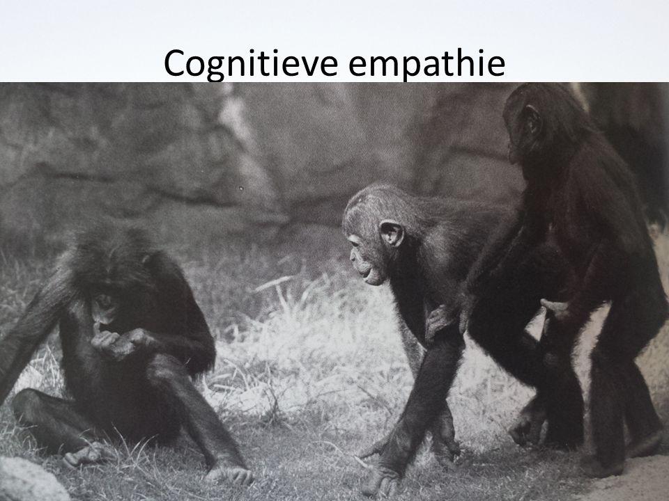 Cognitieve empathie