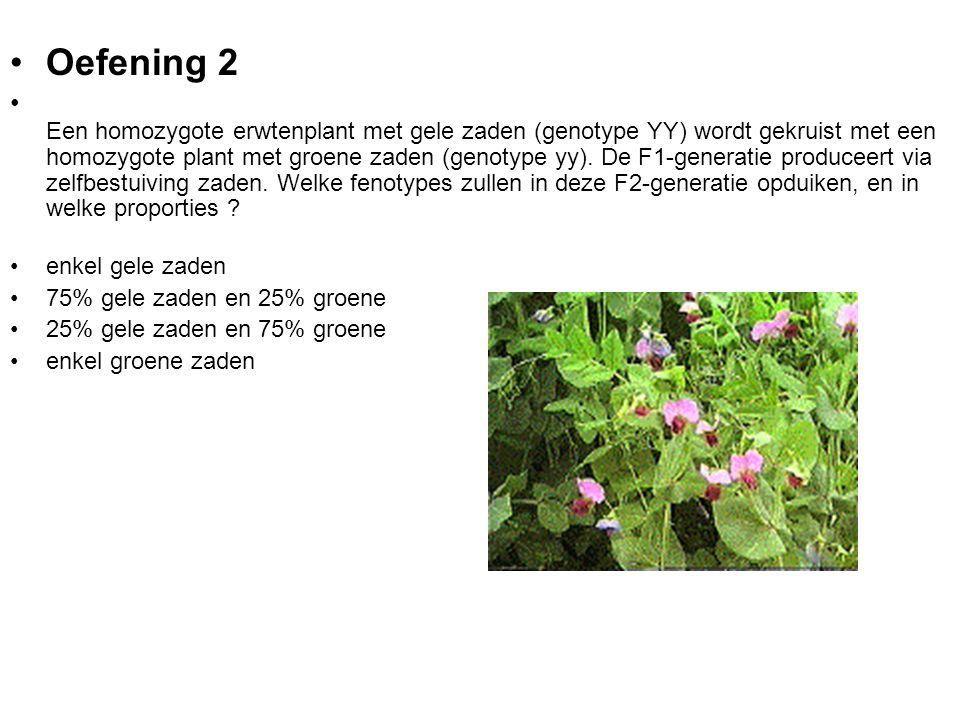 Oefening 2 A ntwoord 2 (75% gele en 25% groene) is JUIST Als het ging om een gelukkige gok, bekijk dan onderstaande verklaring Uit het onderstaande Punnett-diagram blijkt dat alle F1-planten het genotype Yy hebben en dus gele zaden produceren.