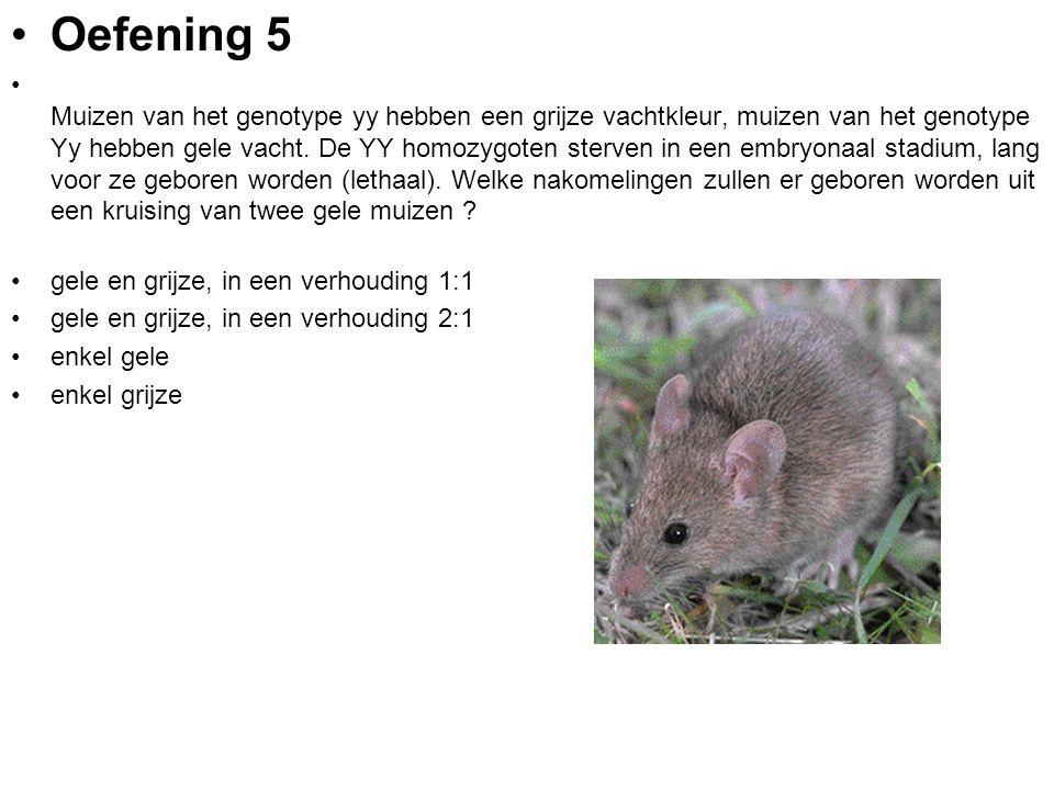 Oefening 5 Muizen van het genotype yy hebben een grijze vachtkleur, muizen van het genotype Yy hebben gele vacht. De YY homozygoten sterven in een emb