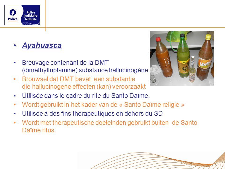 Ayahuasca Breuvage contenant de la DMT (diméthyltriptamine) substance hallucinogène. Brouwsel dat DMT bevat, een substantie die hallucinogene effecten
