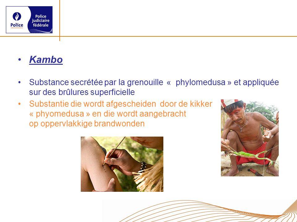Kambo Substance secrétée par la grenouille « phylomedusa » et appliquée sur des brûlures superficielle Substantie die wordt afgescheiden door de kikker « phyomedusa » en die wordt aangebracht op oppervlakkige brandwonden