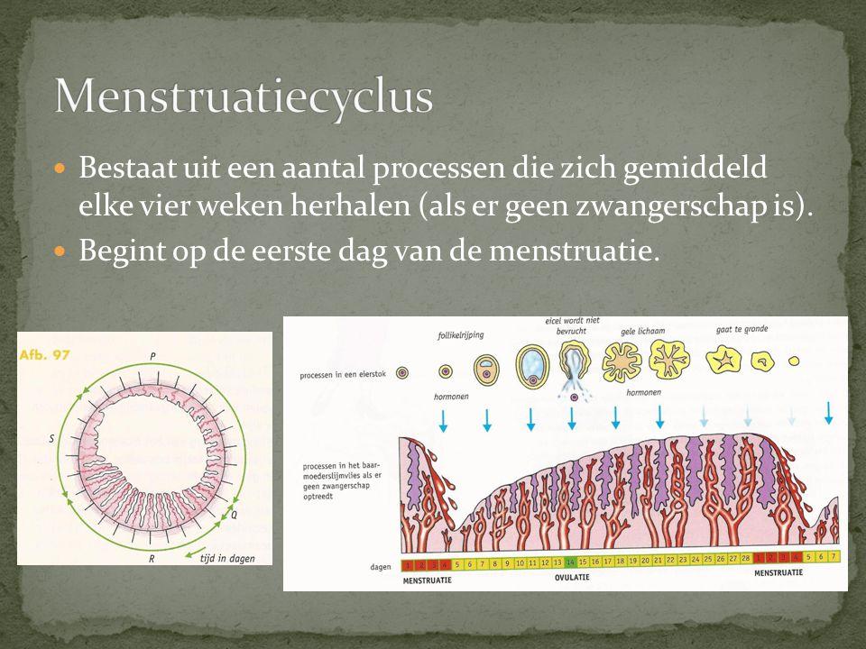Follikelrijping in de eierstokken (o.i.v.hypofysehormonen).