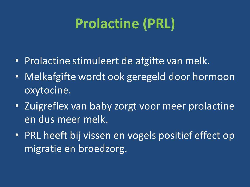 Prolactine (PRL) Prolactine stimuleert de afgifte van melk.