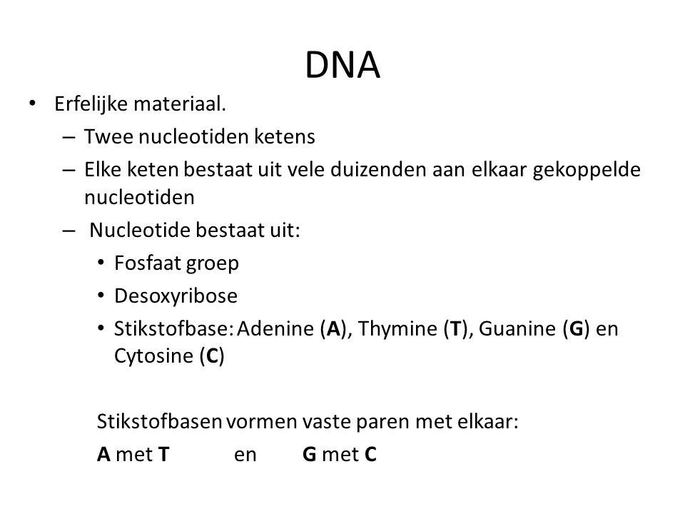 DNA Erfelijke materiaal. – Twee nucleotiden ketens – Elke keten bestaat uit vele duizenden aan elkaar gekoppelde nucleotiden – Nucleotide bestaat uit: