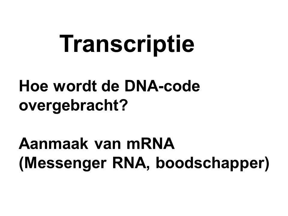 Transcriptie Hoe wordt de DNA-code overgebracht? Aanmaak van mRNA (Messenger RNA, boodschapper)