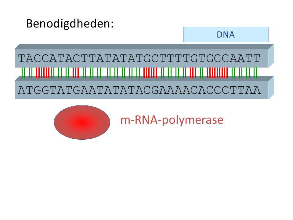 DNA ATGGTATGAATATATACGAAAACACCCTTAA m-RNA-polymerase TACCATACTTATATATGCTTTTGTGGGAATT Benodigdheden: