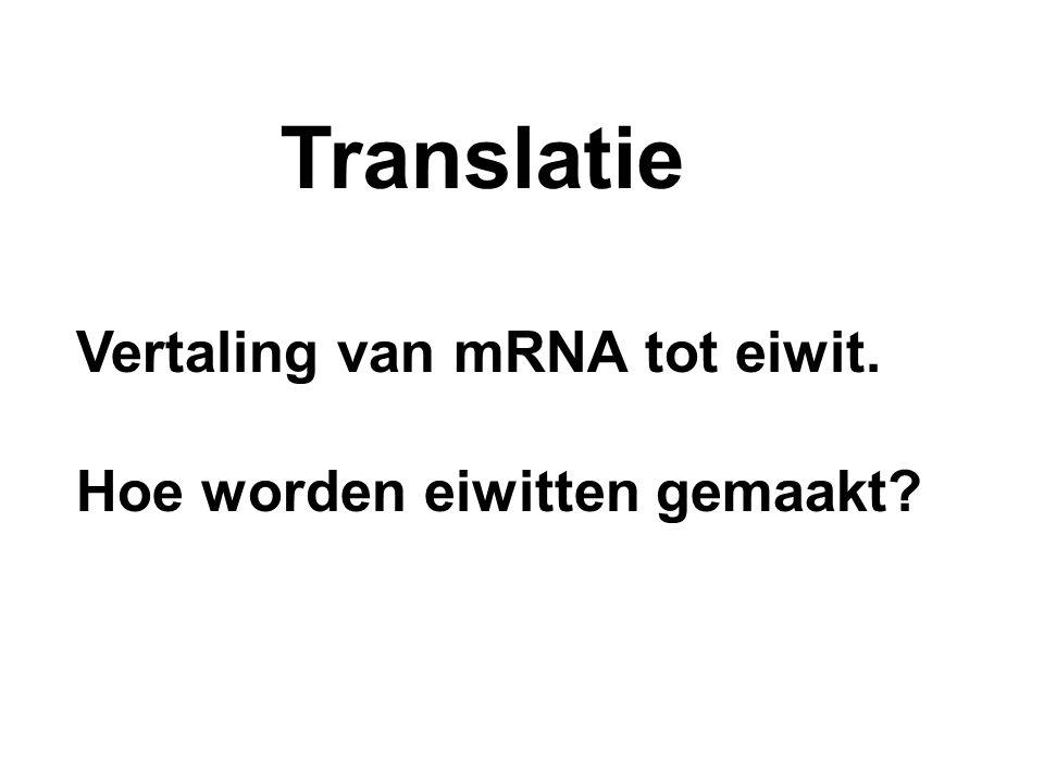 Translatie Vertaling van mRNA tot eiwit. Hoe worden eiwitten gemaakt?