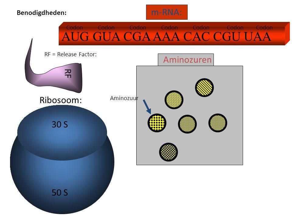 AUG GUA CGA AAA CAC CGU UAA m-RNA: Ribosoom: Aminozuren RF RF = Release Factor: 30 S 50 S Codon Aminozuur Benodigdheden: