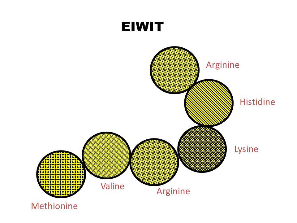 EIWIT Methionine Valine Arginine Lysine Histidine Arginine