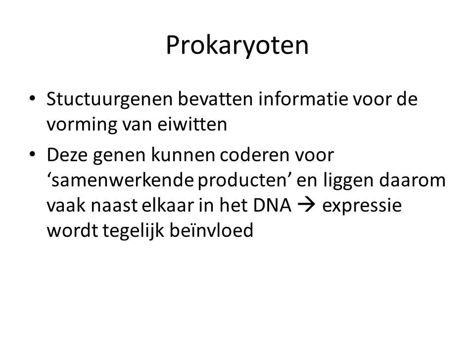 Prokaryoten Stuctuurgenen bevatten informatie voor de vorming van eiwitten Deze genen kunnen coderen voor 'samenwerkende producten' en liggen daarom v